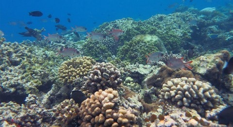 Identifying types of corals at Coco Bodu Hithi