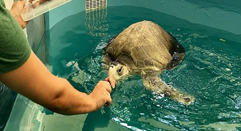 Celebrating the first anniversary of the Marine Turtle Rescue Centre