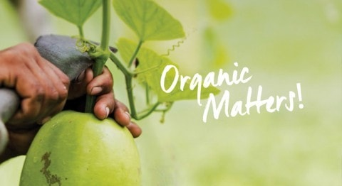 BREEZE ISSUE 5, Organic Matters